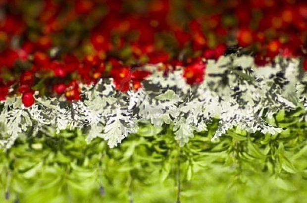 flowers-forming-hungarian-flag